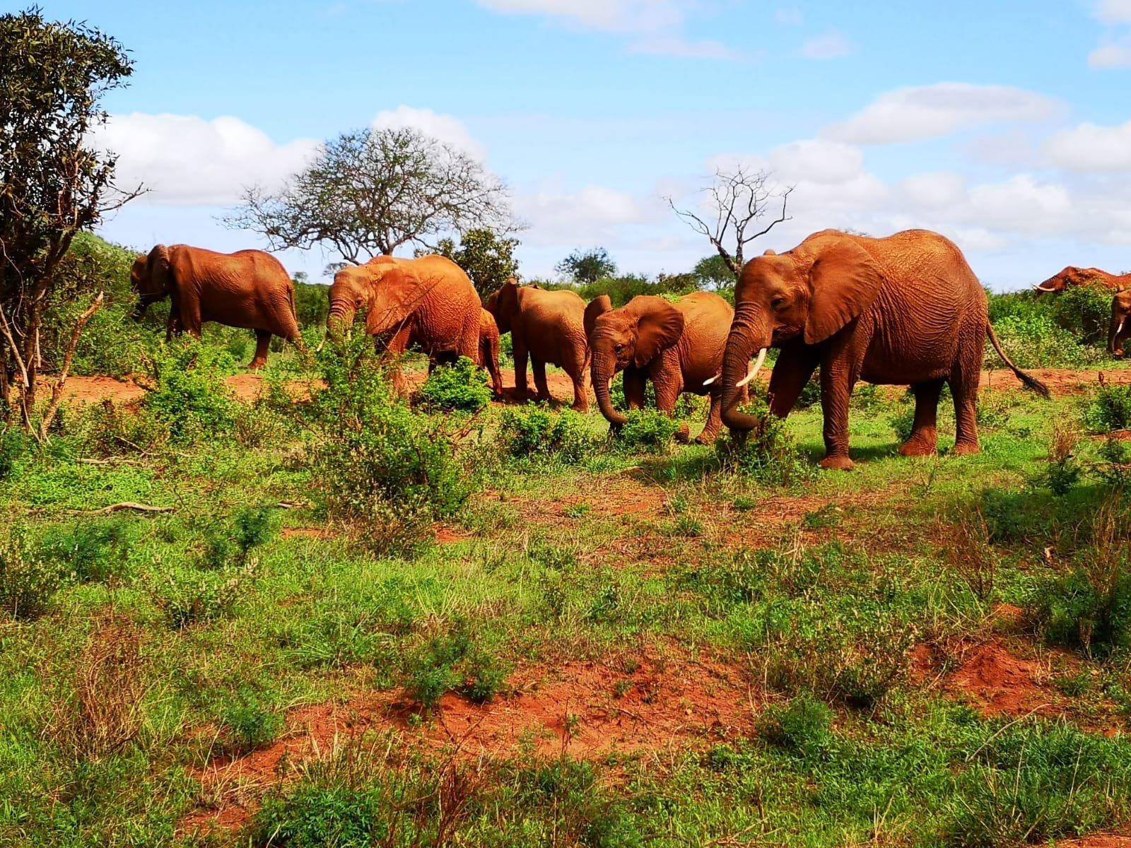 Keňa - zážitky a dojmy z Infocesty