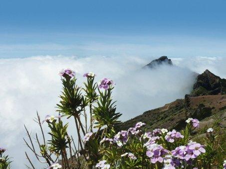 Madeira - ostrov večnej jari