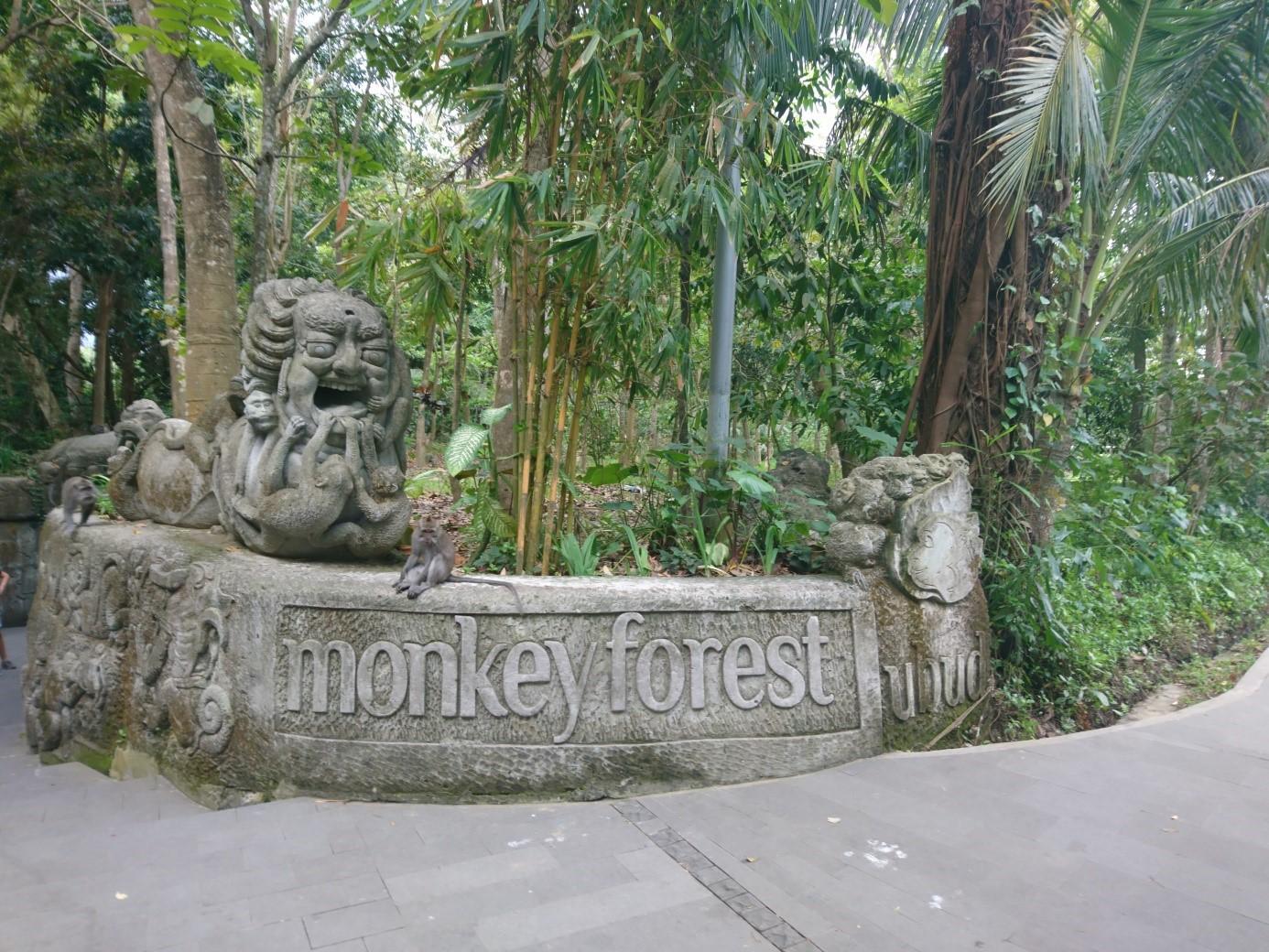 Dovolenka Bali Ubud Monkey Forest
